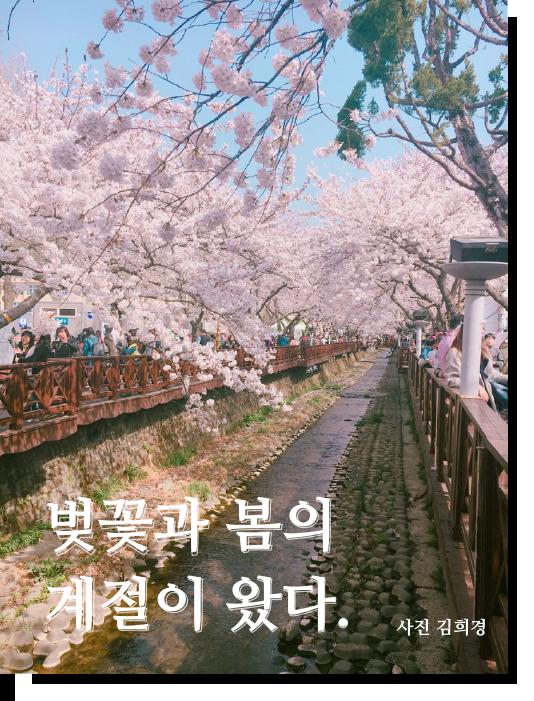 벚꽃과 봄의 계절이 왔다. 벚꽃이 만개한 사진