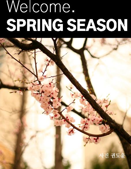 웰컴 스프링 시즌. 벚꽃나무의 한 가지