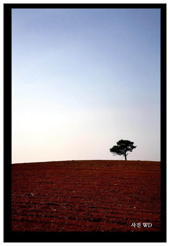 고산지대에 나무 한 그루