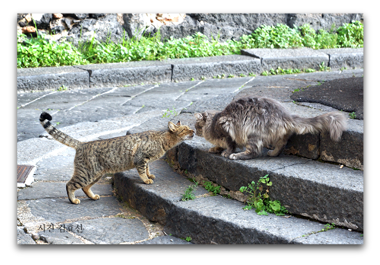고양이 뽀뽀 사진