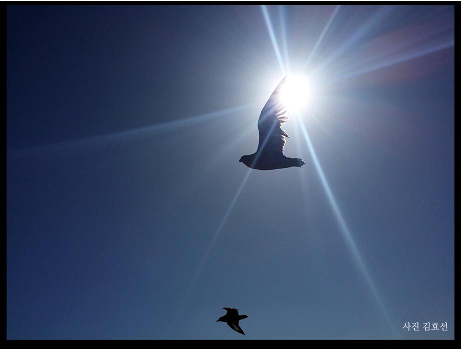 태양을 지나치는 새