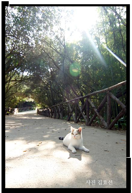 광합성 하고있는 고양이