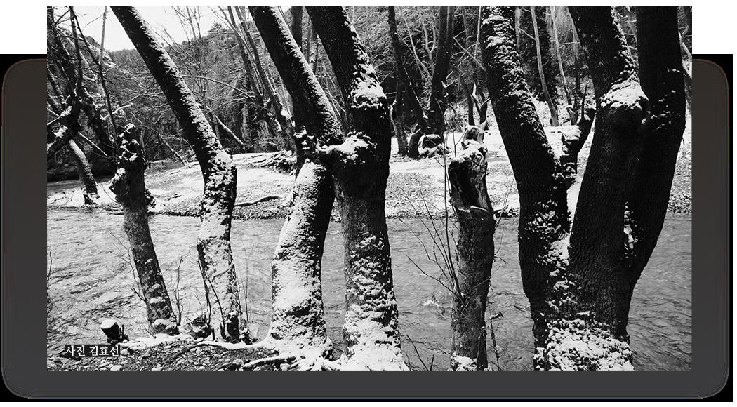 흑백 나무 사진